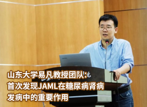 山东大学易凡教授团队:首次发现JAML在糖尿病肾病发病中的重要作用